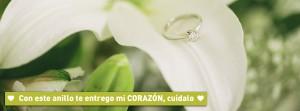 Quiero una boda perfecta1 (3)